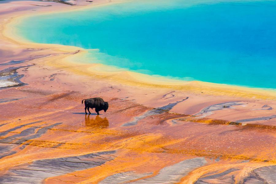 Another Frightening Report About Yellowstone Has Actually Appeared. Here's What You Required To Know