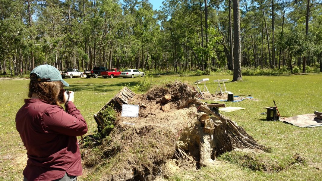Pictures: Cyclone Michael Fell Over Trees and Uprooted 19 th Century Artifacts