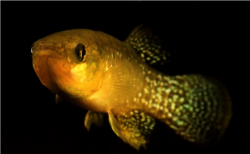 How An Intrusive Types Assisted A Threatened Fish Make It Through Polluted Waters