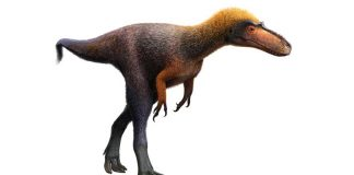 A small secret dinosaur from New Mexico is formally T. rex's cousin