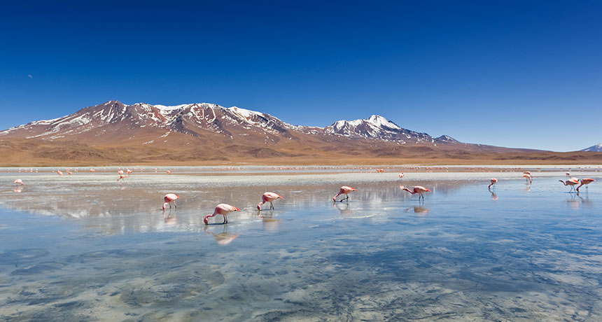 The look for brand-new geologic sources of lithium might power a tidy future