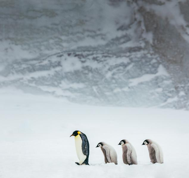 How A Warming Environment And Weakening Sea Ice Have Actually Collapsed An Emperor Penguin Nest