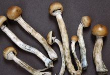 In Close Vote, Denver Becomes first U.S. City To Legalize Psychedelic Mushrooms