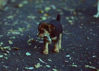 Lady Passes Away from Rabies After Saving Young Puppy While on Trip