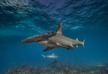 DNA To The Rescue: How Scientist Are Finding Illegal Shark Fins
