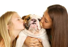 8 Factors Family Pets Enhance Your Health And Wellness