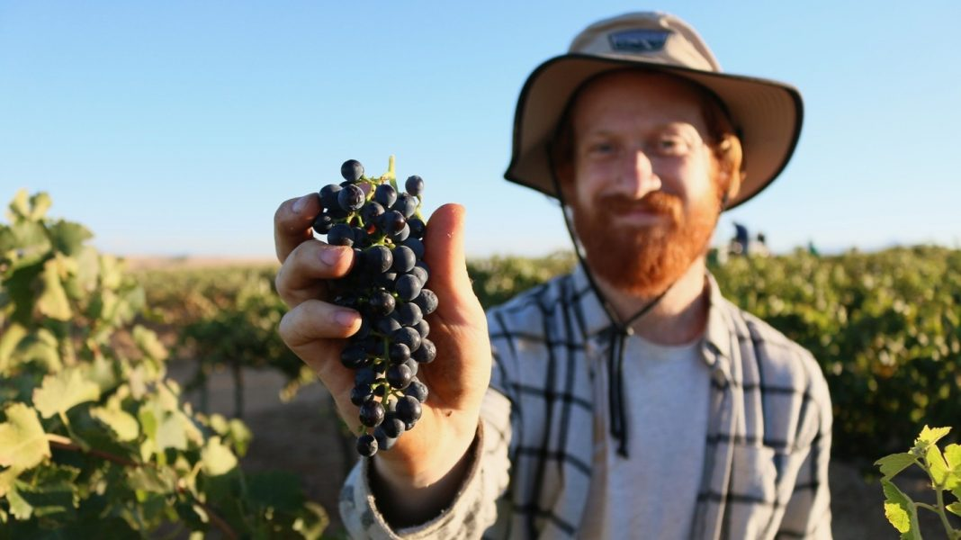 Why Some Wineries Are Ending Up Being 'Licensed B Corp'– And What That Indicates