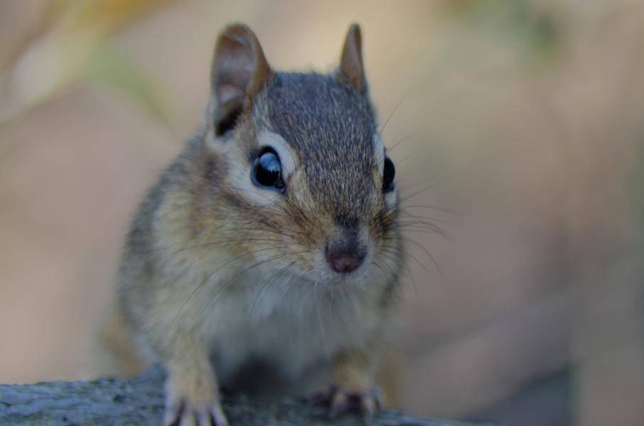 It's A Trap! New Technique Catches Mammal Variety Much Better Than Wildlife Cameras