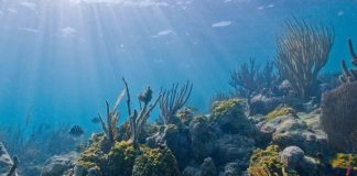 Healthy Coral Reefs Can Avoid Over a Billion Dollars of Flood Damage