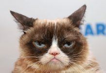 Web's Famous Grumpy Feline Passes Away at Age 7