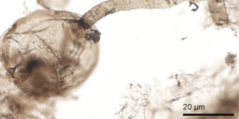 Billion-year-old fossils might be early fungi