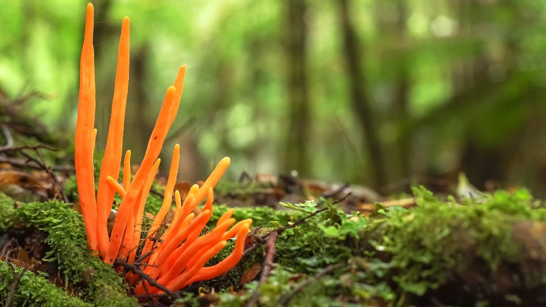 Researchers Discover One Billion Years Of Age Fungi, Earth's Oldest