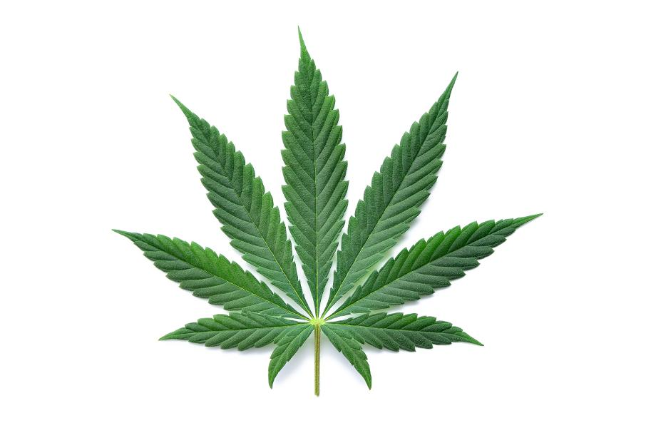 Hereditary Analysis Of Marijuana Lights The Method For Much Better Policy