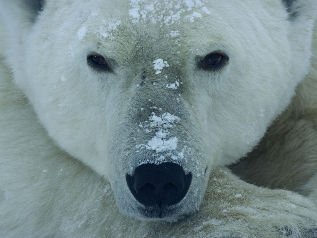 Sensational images expose the fragility and strength of the Earth and its animals