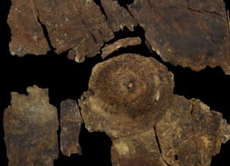 This 2,400- year-old bark guard took a whipping in an Iron Age battle