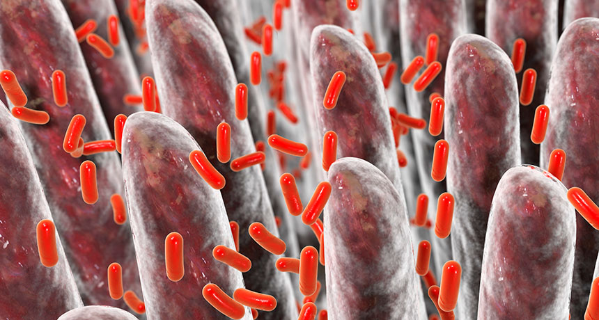 Gut germs might alter the method numerous drugs operate in the body