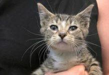 Whiskeridoo! AI called these lovable, adoptable kitties