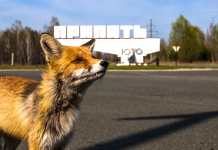 There's a flourishing population of radioactive animals that have actually taken control of the deserted Chernobyl exemption zone, despite the fact that the location is harmful for people
