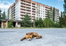 Is It Safe to See Chernobyl?