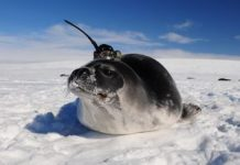 Secret of huge Antarctic ice holes fixed by robotics, tricked-out seals