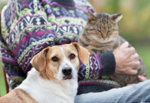 11 illness that can pass from animals to people
