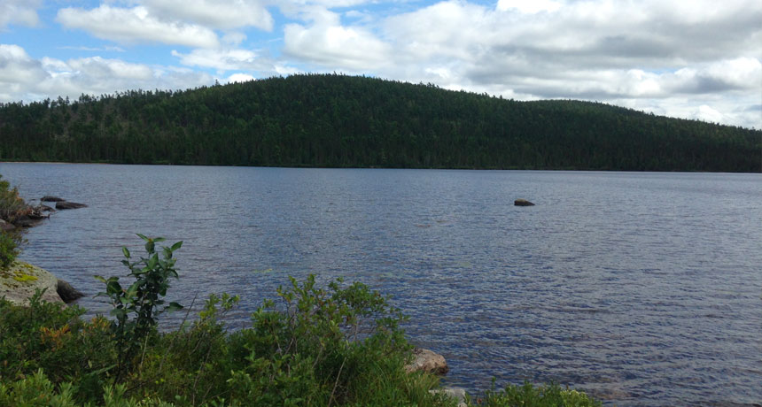 Some Canadian lakes still save DDT in their mud