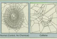 An old NASA research study provided spiders drugs to see how it impacted their webs, and it'll make you wish to never ever consume coffee once again