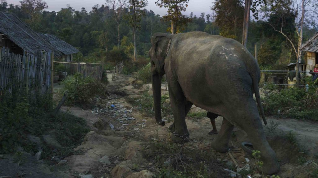 Monsters of Problem: The World's Other Imperiled Elephants