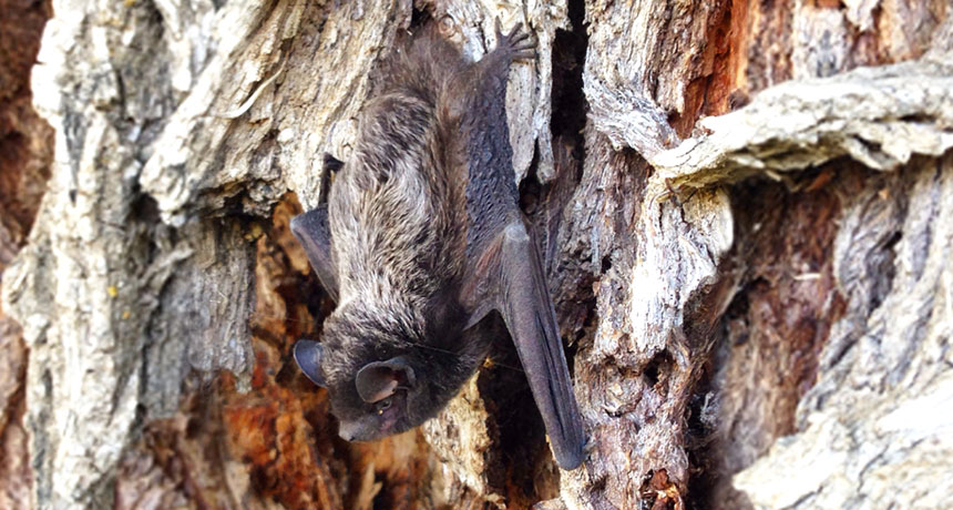 Bats are the primary reason for unusual rabies deaths in the U.S.