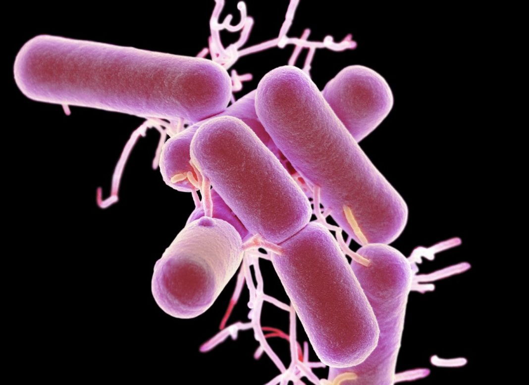 The Very Same Precise Foods Affect Everyone's Gut Germs In a different way