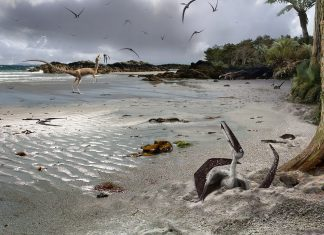 Infant Pterosaurs Might Fly. So, Did They Required Their Moms and dads?
