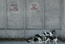 Chernobyl employees are embracing the website's infected pet dogs, however not all of them are safe to animal