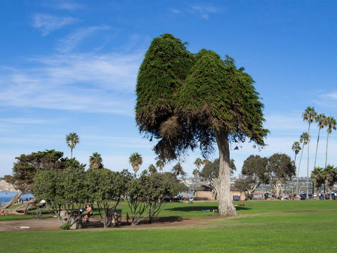 The renowned tree believed to have actually motivated 'The Lorax' has actually all of a sudden passed away– and the entire types is at threat of termination