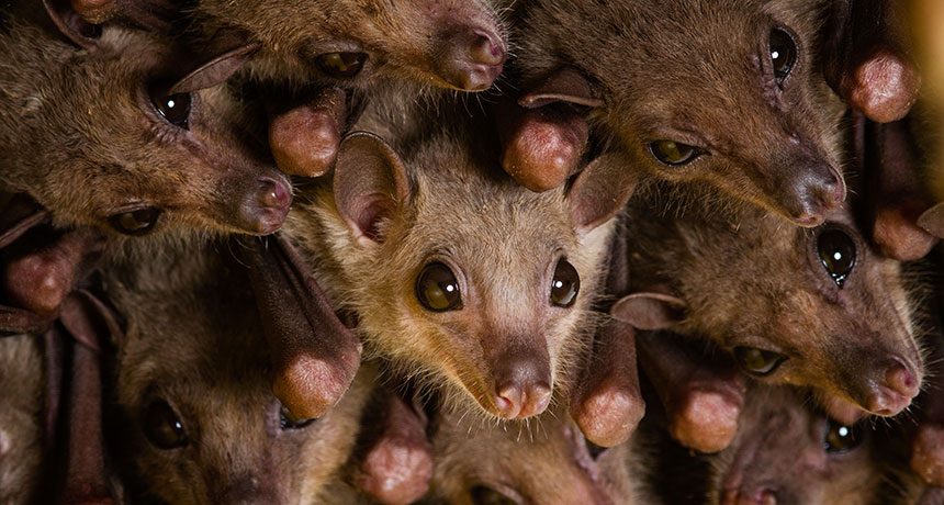 Mice and bats' brains sync up as they connect with their own kind