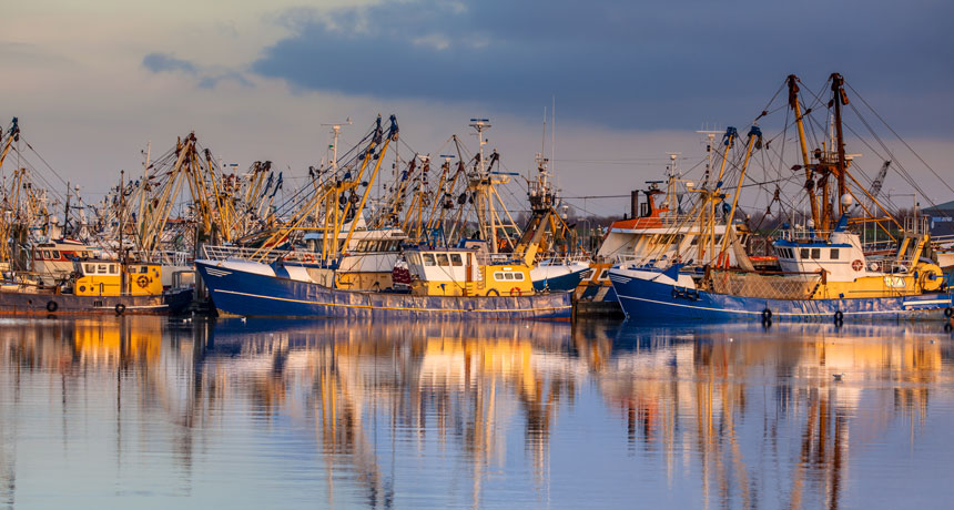The world's fisheries are extremely linked, thanks to child fish