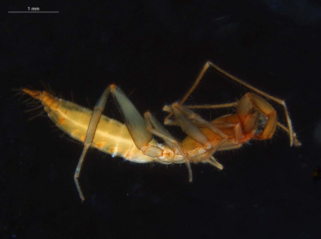 Why These Strange, Reclusive Arachnids Got Away Underground in Evolutionary Waves