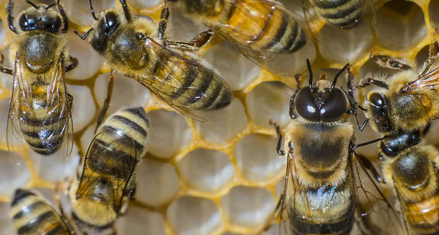 U.S. honeybees had the worst winter season die-off in more than a years