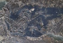 Indications of the color blue have actually been discovered in a fossil for the very first time