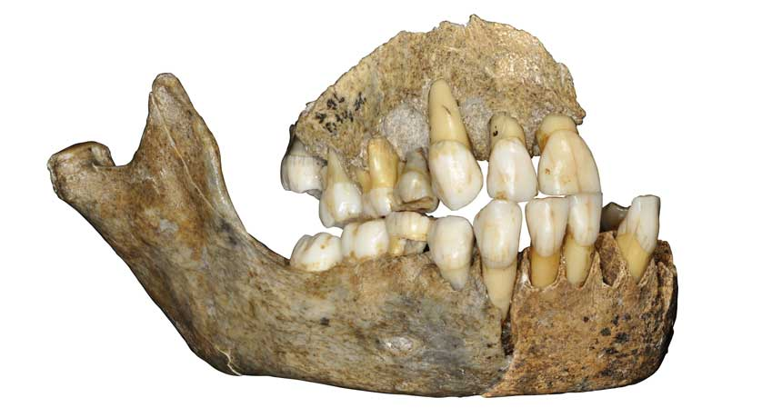 DNA exposes a European Neandertal family tree that lasted 80,000 years