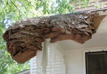 Yellow Coat 'Super Nests' the Size of Cars And Trucks Are Appearing in Alabama