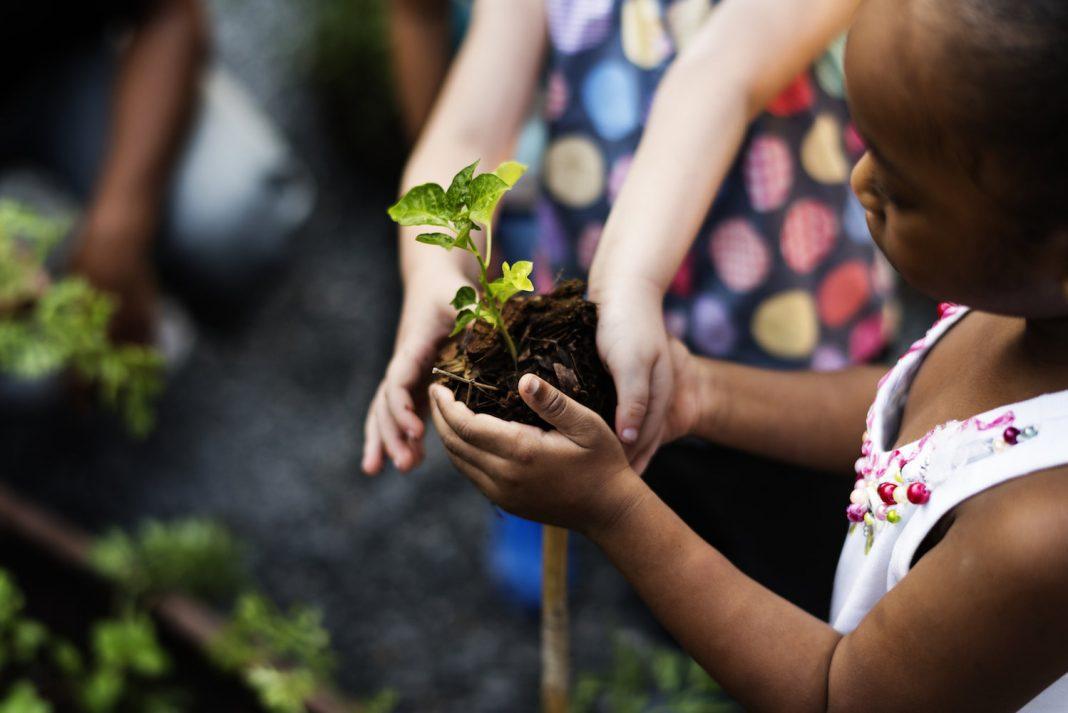 Wish To Battle Environment Modification? Plant 1 Trillion Trees.