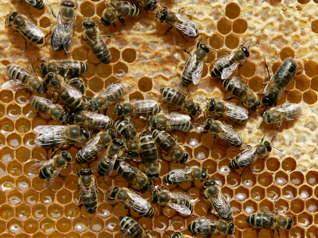 12 astonishing truths about bees