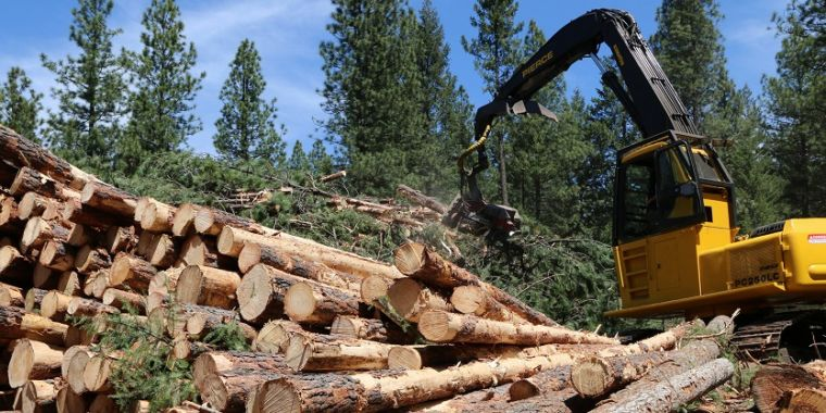 Just how much carbon does our lumber sequester?