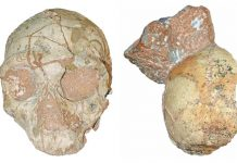 A Greek skull might come from the earliest human discovered beyond Africa