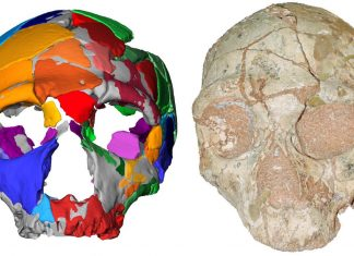 Modern People Stopped Working in Early Effort to Move Out of Africa, Old Skull Reveals