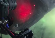 Scuba Diver Has Legendary Nose-to-Nose Encounter with Among one of the most Evasive Sharks Hiding in the Deep Sea