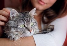 Here's the very best Method to Animal a Feline, According to Science