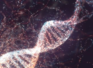 CRISPR Gene Modifying Will Be Utilized Inside People For the Very First Time in Treatment for Loss Of Sight