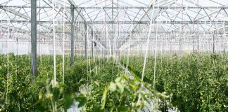 Recycling Wastewater for Crops Might Minimize Water Shortage, If We Can Stand It.