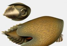 This Unusual Ancient Sea Beast Appeared Like the Centuries Falcon